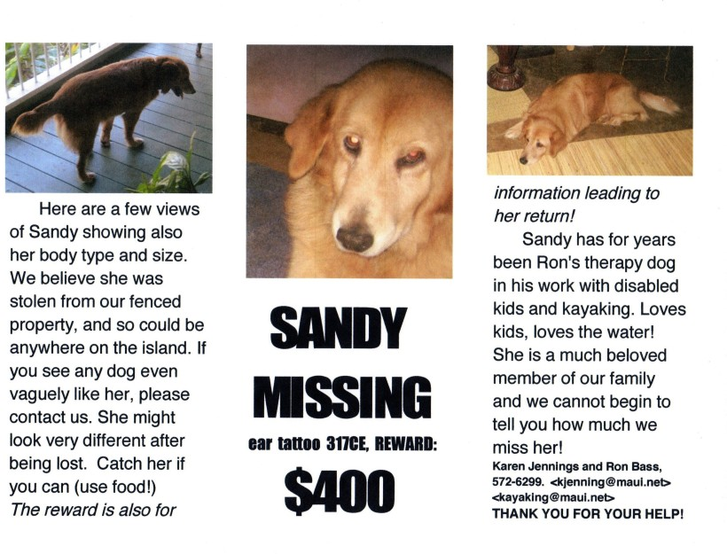Help find Sandy the Therapy Dog in Hawaii