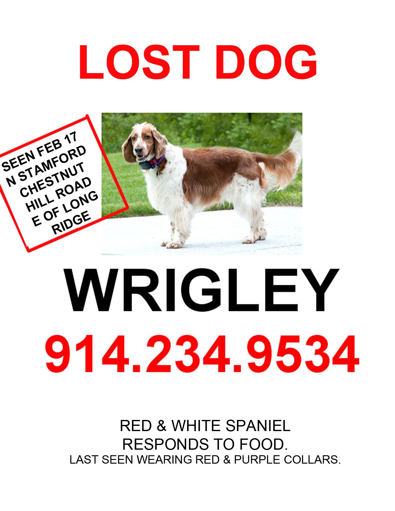 lost dog update wrigley roth blog