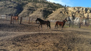 Black Hills Sanctuary holding corral