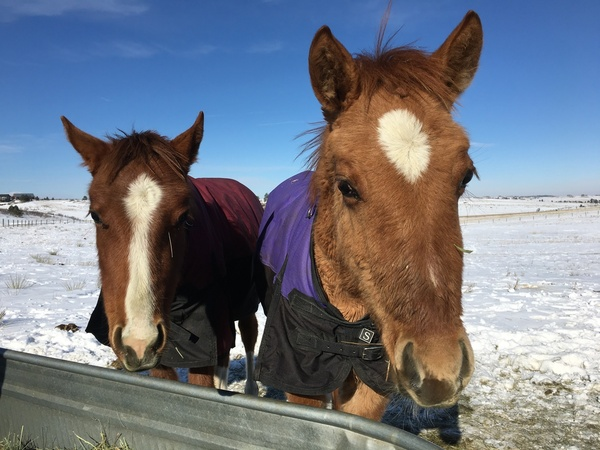 foals blankets