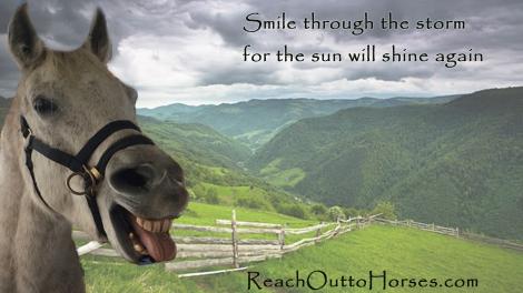 Smiling horse.jpg
