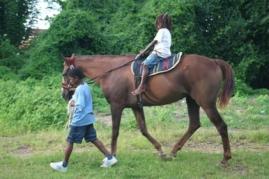 healing with horses may 9 2