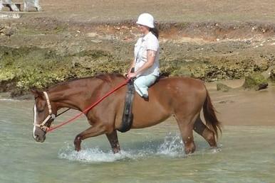 healing with horses May 9 3