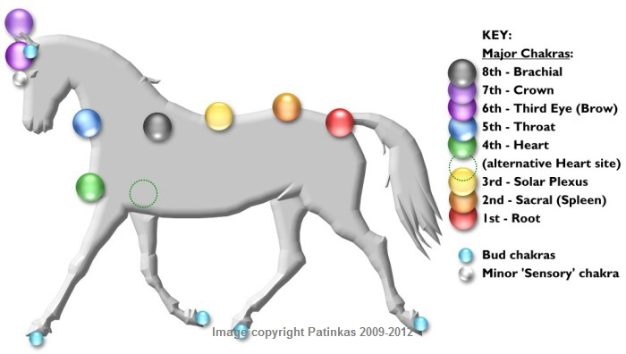 a_Horse_Chakras_Pic for BLOG 3