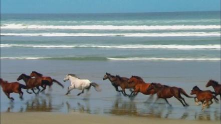 Vieques horses 2