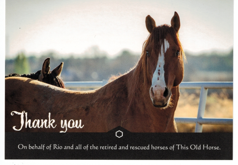 thank-you-this-old-horse.jpg