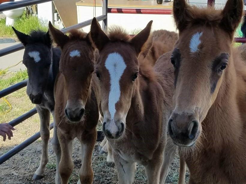 PMR foals